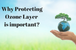 All We Need to Know About Ozone Layer Depletion
